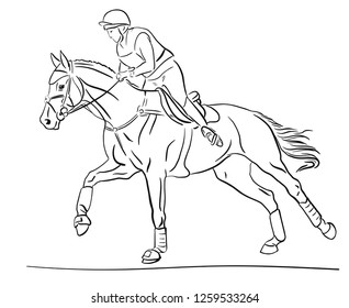 Equestrian event. Rider cantering on a horse.