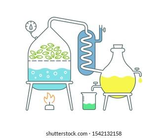 Essential oil making. Distillations aromatic oils production Perfumery substances Distiller equipment.