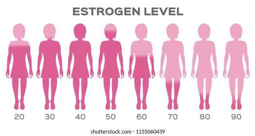estrogen Hormone Level vector / man