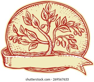 Etching engraving handmade style illustration of an olive tree set inside oval with ribbon on isolated background.