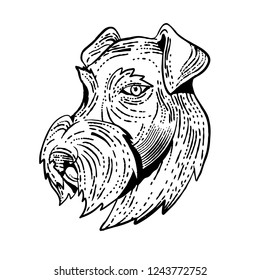Etching style illustration of head of Airedale Terrier, Bingley Terrier or Waterside Terrier, a dog breed of the terrier type viewed from side done on scraperboard scratchboard style black and white.