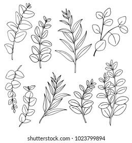 Eucaliptus branches line art drawing set.