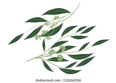 Eucalyptus Branch. Decorative Greenery of Rustic Wedding. Vector Eucalyptus Leaves Set. Elegant Floral Elements Big Selection for Wedding Design, Invitation, Card. Eucalyptus Branches in Vintage Style