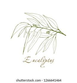eucalyptus branch, vector logo, hand-drawn