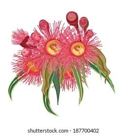 Eucalyptus flower realistic design