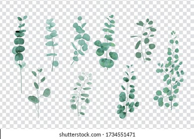 Eucalyptus leaves set isolated on transparent background
