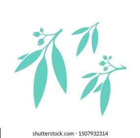 Eucalyptus leaves. Vector illustration EPS 10. Eucalyptus tree on white background. Gum tree