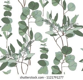 Eucalyptus seeded, silver dollar, baby blue tree leaves art designer, foliage, elements in rustic style seamless pattern. Vector nature decorative various elegant illustration for design.