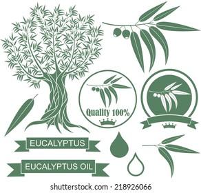 Eucalyptus set. Isolated eucalyptus tree on white background