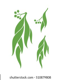 Eucalyptus. Vector illustration. Green eucalyptus tree on white background