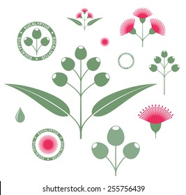 Eucalyptus. Vector illustration. Isolated branch with flowers on white background