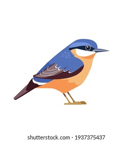 Eurasian nuthatch or wood nuthatch (Sitta europaea) is a small passerine bird. Cartoon flat beautiful character bird of ornithology, vector illustration isolated on white background.