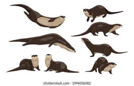 Eurasian otter Lutra lutra set. The Eurasian river otter. Wild semiaquatic mammal of Eurasia. Realistic vector animal