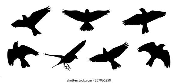 Eurasian skylark in flight silhouettes
