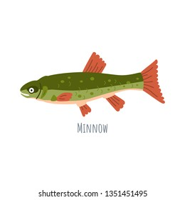 European Freshwater fish - Minnow. Cartoon character fish Phoxinus isolated on white background.