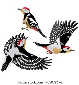 European middle woodpeckers in cartoon style are sitting and flying on white background