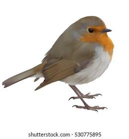 European Robin - Erithacus rubecula. Hand drawn vector illustration of an English or European robin, on transparent background.