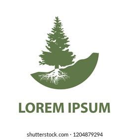 evergreen pine tree,  logo template