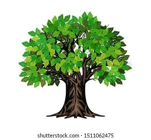 evergreen tree vector illustration, oak tree. olive tree on the garden.