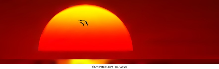 Evocative picture of birds flying in front of setting sun and beautiful red sky
