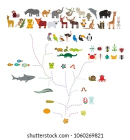 Evolution in biology, scheme evolution of animals isolated on white background. children's education, science. Evolution scale from unicellular organism to mammals. back to school. Vector
