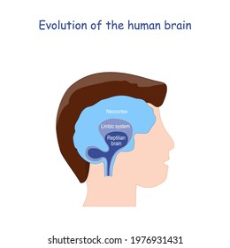 Evolution of the human brain. From Reptilian brain to Limbic system and Neocortex. Human's head and brain. Vector illustration