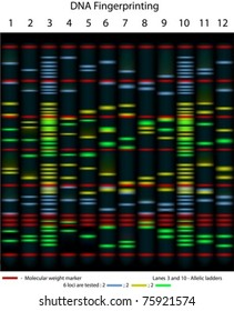An example of DNA fingerprinting, 10 individuals are tested for 6 loci; scientifically accurate