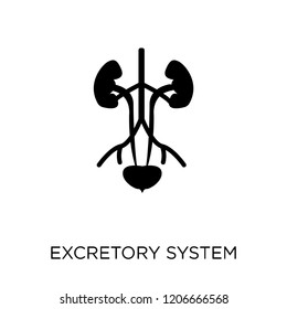 Excretory system icon. Excretory system symbol design from Human Body Parts collection.