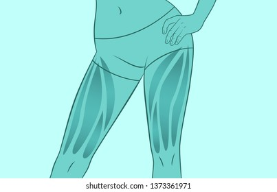 Exercises for the muscles of the legs. Quadriceps. Silhouette of a woman. Sport, workout, fitness, bodybuilding.