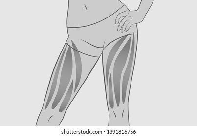 Exercises for the muscles of the legs. Quadriceps. Silhouette of a woman. Sport, workout, fitness, bodybuilding. Gray option.