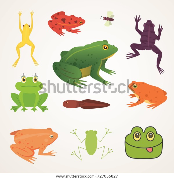 Exotic Amphibian Set Frogs Different Styles Stock Vector (Royalty ...