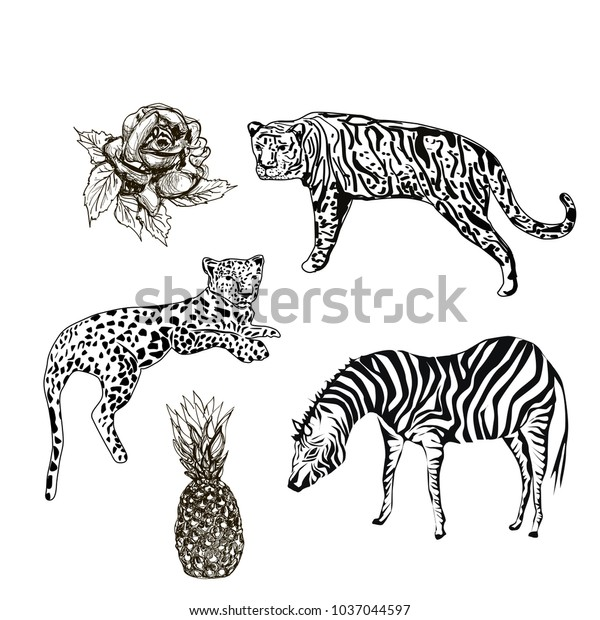 Exotic Animals Rose Pineapple Sketches Vector Stock Vector ...