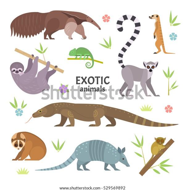Экзотические животные. Векторная иллюстрация с плоскими животными, в том числе муравейник, кольцехвостый лемур, лемур лорис, ленивец, монитор Комодо ящерица, армадильо, меркат, тарсиер, изолированный на белом.