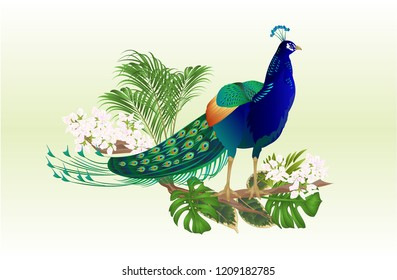 Exotic bird beauty Peacock  natural and tropical flowers watercolor vintage vector illustration editable hand drawn