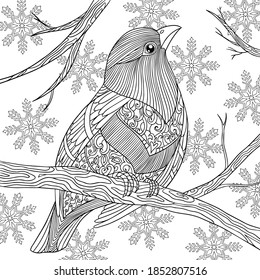 Exotic bird sitting on tree branch in winter. Nature with snowflakes. Christmas wildlife coloring page. Vector hand drawn illustration with doodle for coloring book for adult.