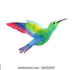 Exotic bird. Sketch of a hummingbird. Watercolor vector illustration