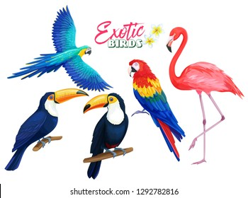 Exotic birds. Parrot, flamingo and toucan. Cartoon iluustration for summer tropical paradise advertising vacation design.