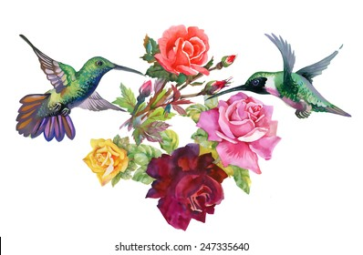 Exotic colibri birds with rose flowers colorful on white background vector illustration
