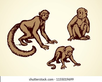 Exotic cute young little humanoid catarrhini haplorhine Hominoidea kid pet isolated on white backdrop. Freehand line black ink hand drawn picture emblem logo sketchy in art scribble style pen on paper