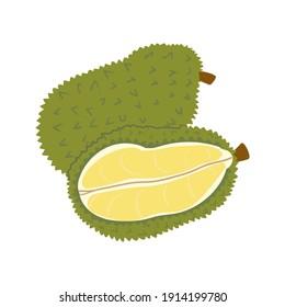 Exotic durian,jack fruit. Summer fruits, Durio, Artocarpus, whole fruits and half. Vector illustration cartoon flat icon isolated on white background.