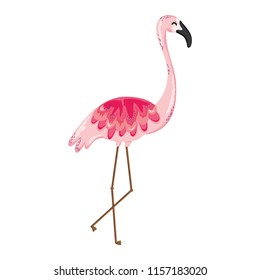 exotic flemish bird tropical animal