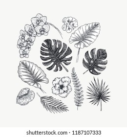 Exotic flowers and leaves collection. Design kit. Botanical vintage illustration.