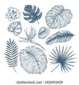 Exotic flowers and leaves collection. Design vector kit. Botanical vintage illustration. Vector illustration