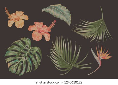 Exotic flowers, palm leaves, jungle monstera leaf, strelitzia, bird of paradise flower set. Vector vintage tropical illustrations, floral elements isolated. Hawaiian style