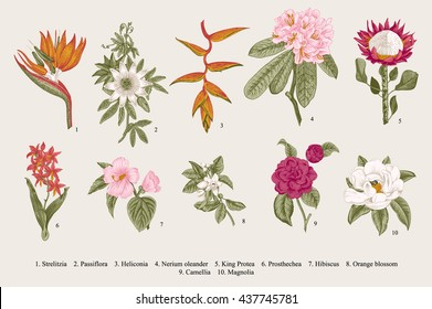 Exotic flowers set. Botanical vector vintage illustration. Design elements. Colorful