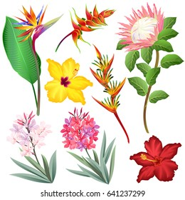 Exotic flowers (Strelitzia, Heliconia, Protea, Oleander, Hibiscus). Set of hand drawn vector illustrations on white background.