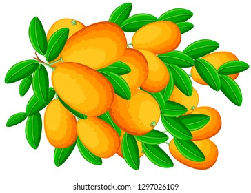 Exotic fruit kumquat with green leaves. Fresh fruit cartoon style. Flat vector illustration isolated on white background. Kumquat branch.