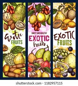 Exotic fruit sketch sweet food. Tropical pomelo, kumquat and quince, jackfruit, ackee and tamarind, morinda, sapodilla and jabuticaba berry, jujube, marula and sweetsop