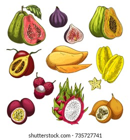 Exotic fruit tropical farm product sketch set. Vector mango, papaya, passion fruit, carambola starfruit, fig, lychee, dragon fruit, guava, maracuja and tamarillo isolated icon for food, drink design