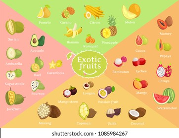 Exotic fruits collection color vector illustration of pomelo kiwano citron pineapple melon and banana, tasty food set, bael mango and mamey fetus